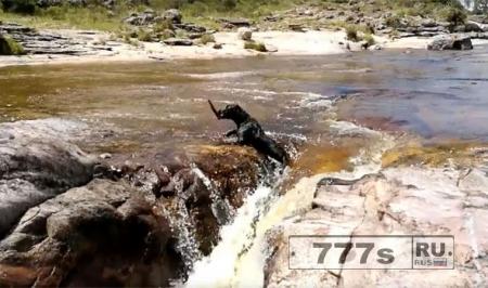 Собака чуть не утонула в быстром потоке, но ей на помощь пришла другая собака.