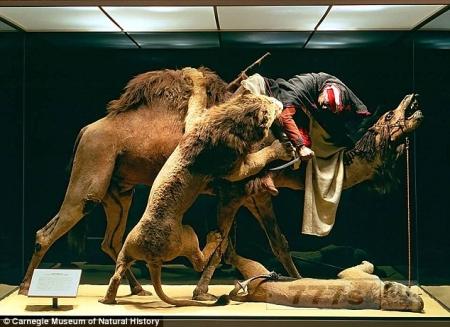 Работники музея обнаружили настоящий человеческий череп внутри 148-летней гипсовой фигуры на диараме.