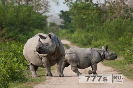 Браконьеры убившие носорога были пойманы с помощью селфи.