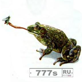 Ученые разгадали охотничий секрет лягушек.