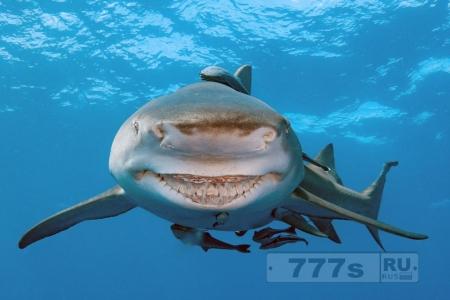Улыбающаяся акула выглядит просто как дружелюбный Брюс из мультика «В поисках Немо».