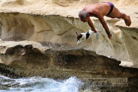 Храбрый терьер джек рассел ныряет в воду с 4-метровой скалы со своим владельцем.