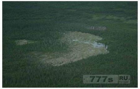 Канадские бобры поколениями строили гигантскую плотину