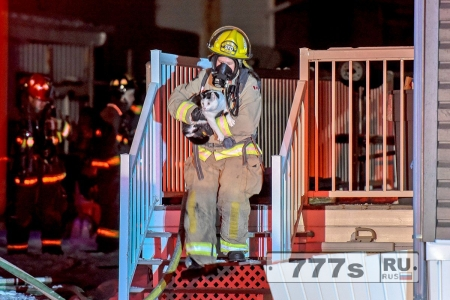 Кошка спасает семью от огня, кусая руку хозяина.