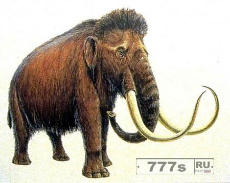 Шерстистые мамонты могут быть возрождены из мертвых.