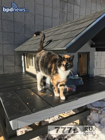 Отдел полиции построил дом для бездомного кота и теперь он часть подразделения.