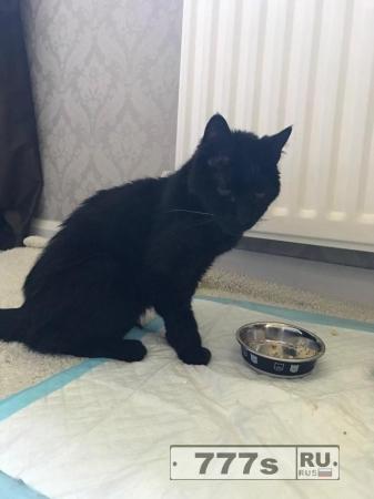 Владелица кота Йода в шоке, кот вернулся домой спустя 15 лет после пропажи.