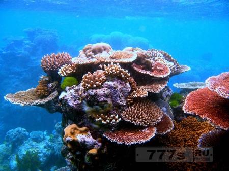 Микропластик угрожает экологии океана.