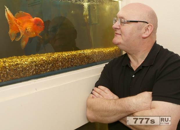 Самая большая британская золотая рыбка стоит £4,500.
