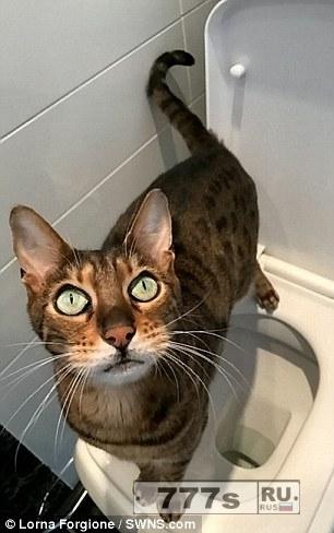 Невероятно умная кошка научилась сама ходить в туалет.