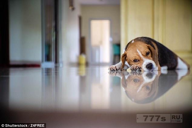Депрессивным собакам дают Валиум, когда их оставляют дома одних на несколько часов, пока их хозяева на работе.