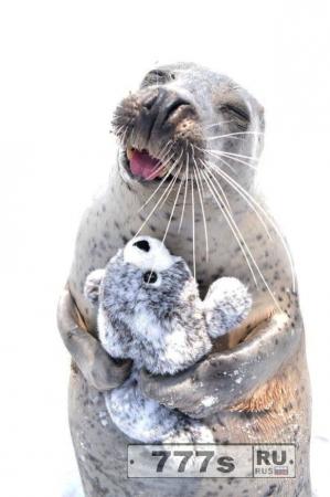Очаровательный тюлень не может скрыть своей улыбки, когда он играет с мягкой игрушкой.