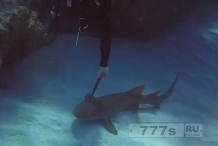 Аквалангист помог акуле с ножом в голове.