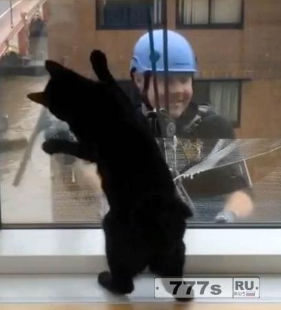 Застенчивый кот с нетерпением ждет, чтобы поиграть с мойщиком окон.