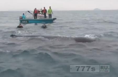 Героические дайверы спасают кита, и он останавливается, чтобы поблагодарить их.