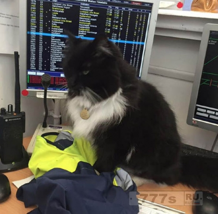 Путешествующих предупреждают, что нельзя продолжать кормить Феликса всемирно известного железнодорожного кота.