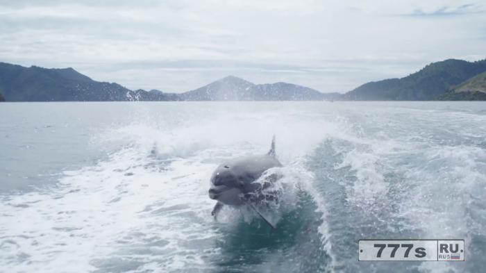 Эти выпрыгивающие из воды дельфины просто работают на камеру.