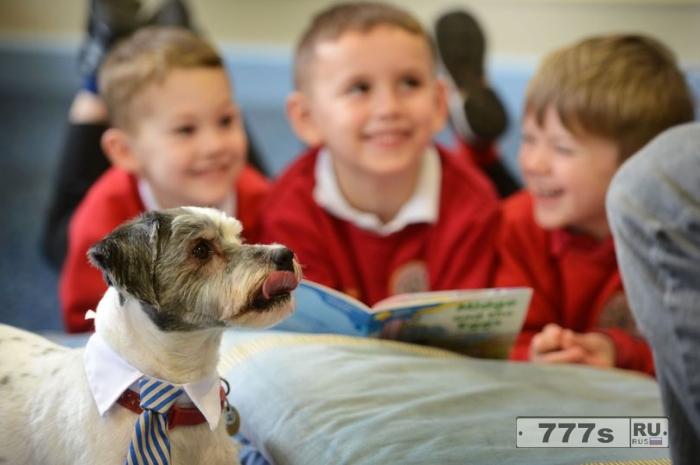 Прелестный пес по кличке Брайан, помогает детям в начальной школе учиться читать.