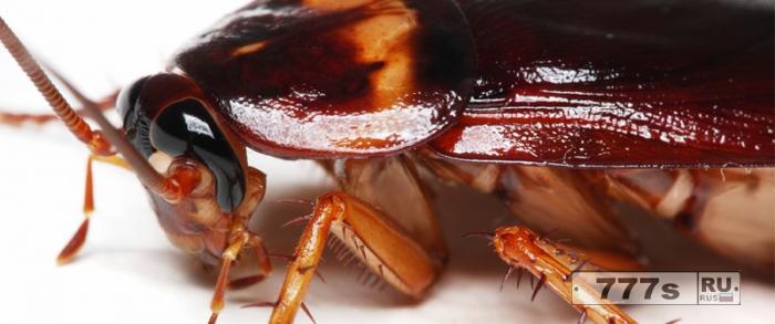 Ученые выяснили, почему мир никогда не избавится от тараканов.