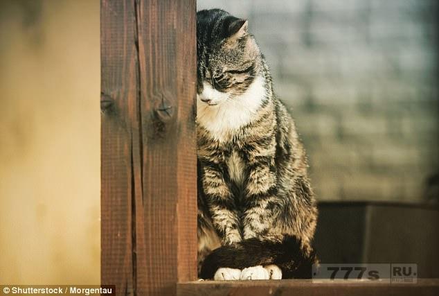 Ученые раскрывают внутренние мысли кошки декодируя их мимику.