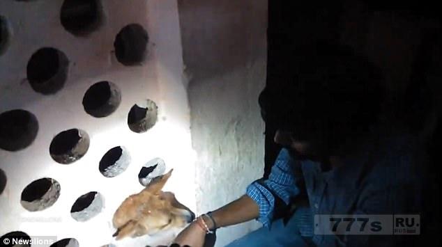Беспризорный щенок, который застрял головой в стене, был освобожден с помощью кокосового масла.