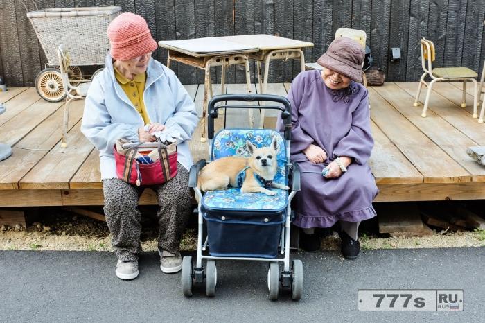 Домашние животные в колясках или как японские владельцы поразному подходят к выгулу своих собак.