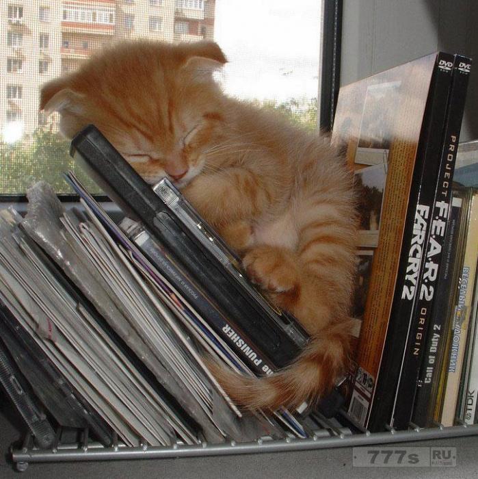 Смешные фотографии кошек сидящих в необычных местах.