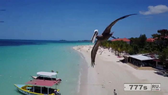 Пеликaн сталкивается с дроном над песчаным пляжем.