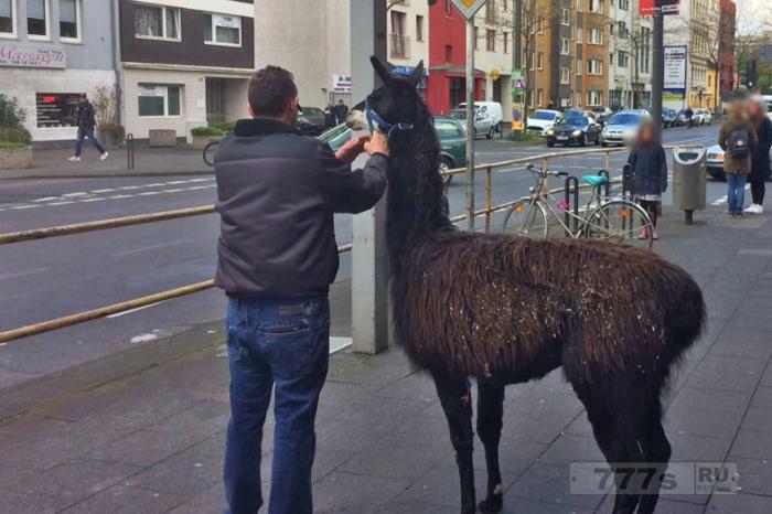 Четырнадцать зверей сбежало из немецкого зоопарка, вызвав хаос на улицах.