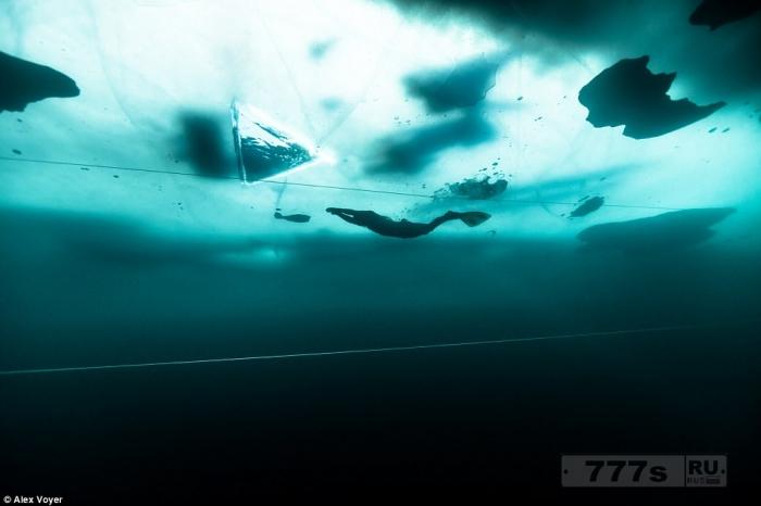Фотографии показывают, как смельчак проплыл без акваланга под 173-метровым полем льда.