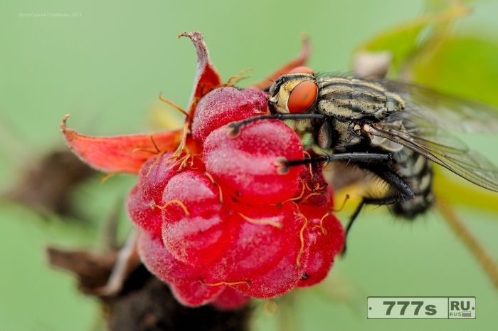 Что действительно означает, когда муха садится на вашу еду (и почему вы должны перестать есть и сразу выбросить).