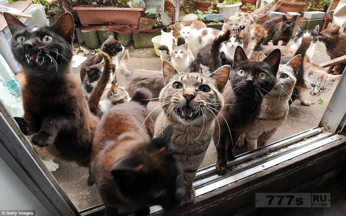 Места по всему миру, которые были захвачены животными.