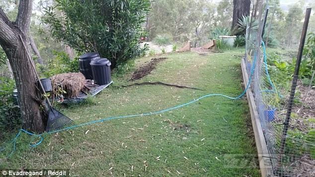 Садовник думал, что он подбирает упавшую ветку на заднем дворе, знали бы вы, что это было в действительности.
