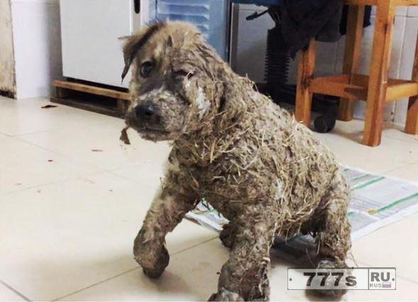 Паскаль, собака, которую облили клеем и оставили умирать, сейчас у нее новая семья.