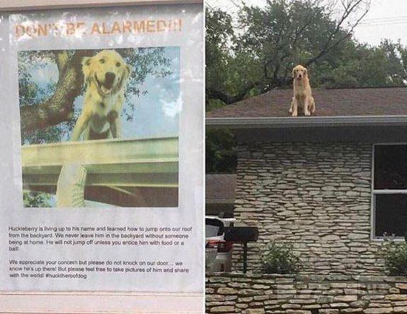 Владелец собаки вынужден установить знак, объясняющий, почему его собака всегда на крыше.