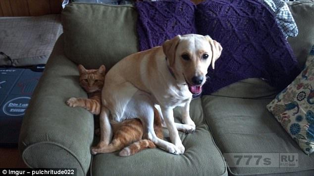 Вот, самые смешные фотографии собак.