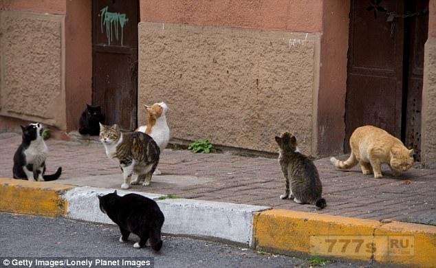 Кошки окружены в датской деревне после того, как вспыхнула эпидемия «кошачьего СПИДа».