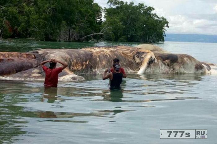 Загадка, как огромное длинношерстное чудище длиной 15 метров, оказалось на отдаленном индонезийском пляже?