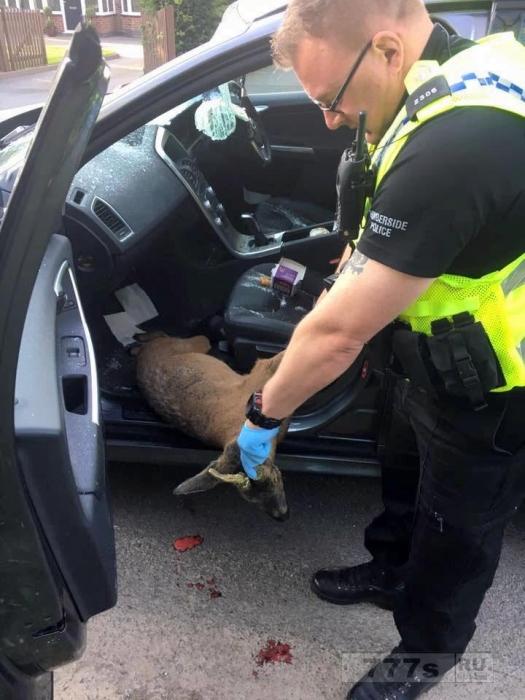 Девочка избежала смерти, когда олень влетел через лобовое стекло автомобиля.