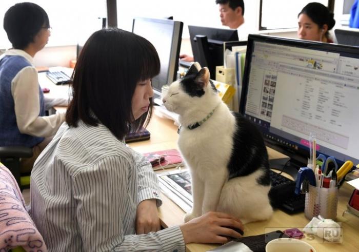 Работники этого офиса в Японии все время играют с кошками, когда не заняты работой.