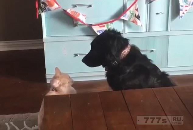 Очаровательная кошка внезапно переполняется эмоциями и обнимает своего собачьего приятеля.