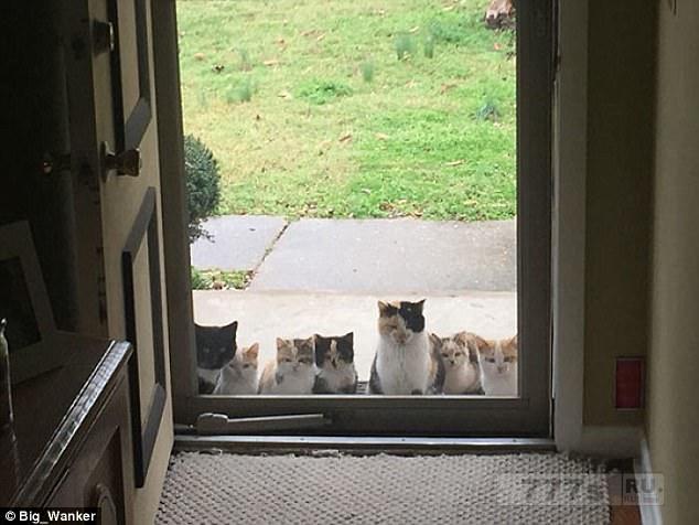 Люди делятся восхитительными снимками как ведут себя бесстрашные кошки.