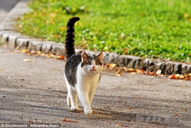 Что ваша кошка пытается рассказать вам, когда она двигает свой хвостом.