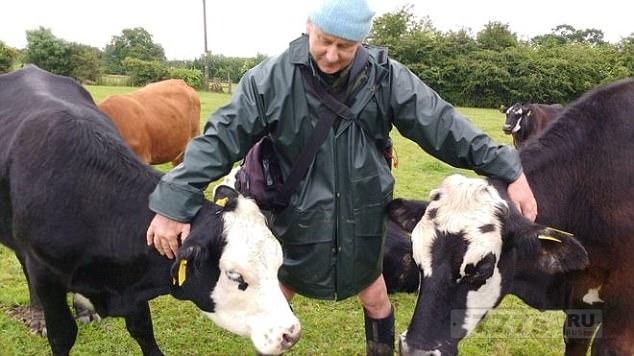 Фермер вегетарианец пожертвовал все свое стадо коров приюту для животных, потому что он не может их убить