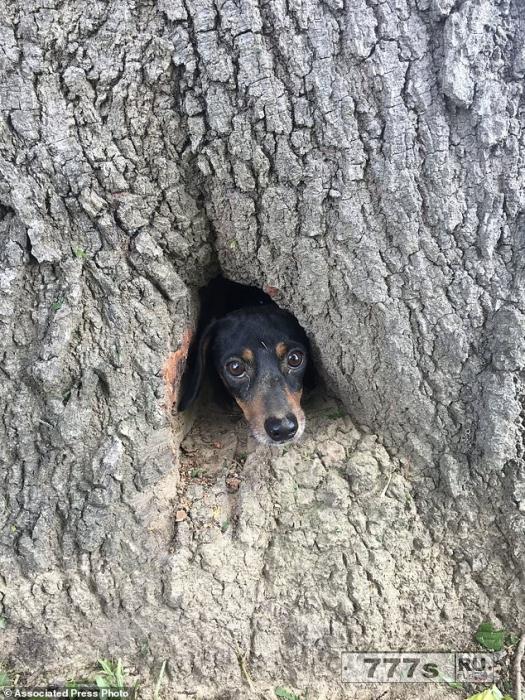 Маленькая собака была спасена после того, как застряла внутри дерева.