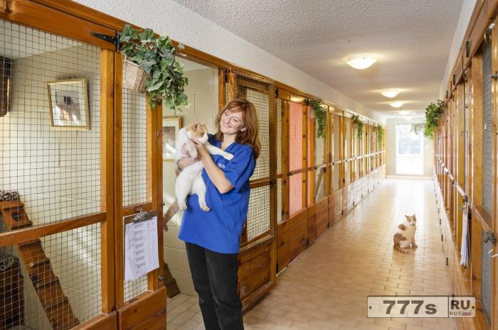 Самый зажиточный кошачий отель в Великобритании предлагает массажи для лап, питание на костяном фарфоре и бархатные подушки для отдыха.