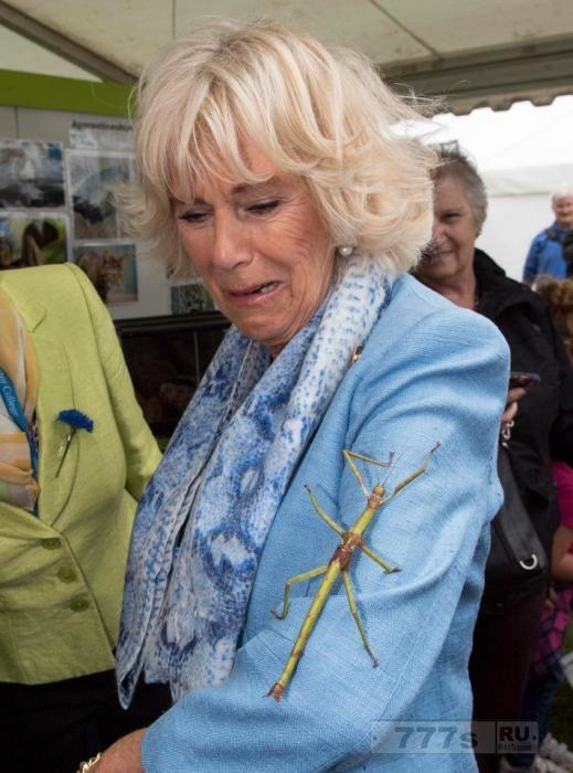 Герцогиня Корнуолла выглядит испуганной, увидев на своей руке большое насекомое в виде палочки.