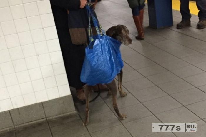 Засуньте своих собак себе в сумку: Удивительные фотографии перевозки собак в Нью-Йоркском метро.