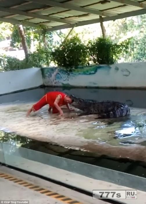 Безумный момент смотритель зоопарка кладет свою голову в огромный рот крокодила ... и результат предсказуем.