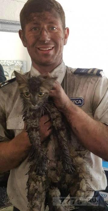 Инспектор из Общества по спасению животных остался грязным после спасения кошки, застрявшей в дымовой трубе.